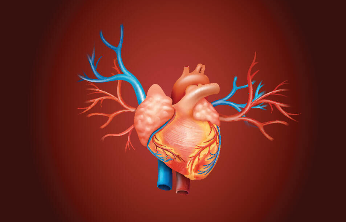 Why do arteries age? The study explores the link to gut bacteria, diet