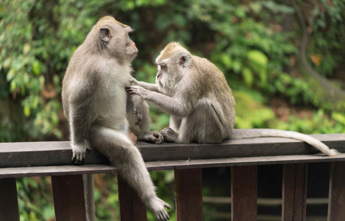 Humans and Monkeys show similar thinking patterns